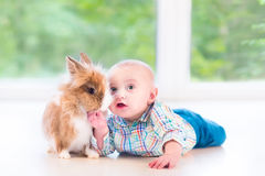 Adorable little baby playing with a funny real bunny. On the floor in a white sunny room with a big garden view window stock photography