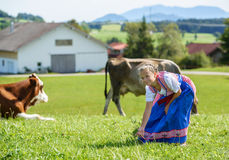 Adorable little  bavarian girl on a country field with cow in Germany Stock Image