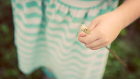 Adorable little blond girl with dandelion flower Stock Photography