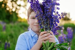 Adorable boy in a blue T-shirt with a bouquet of lupins in a meadow royalty free stock photo