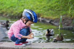 Adorable little boy, feeding ducks Royalty Free Stock Images