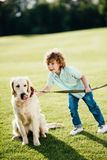 Adorable little boy playing with golden retriever dog. At park royalty free stock image