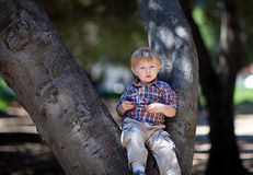 Adorable little boy sitting on a tree in a park Royalty Free Stock Photos