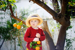 Adorable little boy in straw hat picking fresh ripe tangerine in sunny tangerine tree garden in Italy Stock Photography