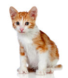Adorable little cat Royalty Free Stock Photos