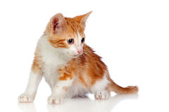 Adorable little cat crouching Royalty Free Stock Images