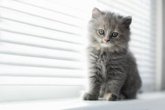 Adorable little cat looking through the window, close up portrai Stock Image