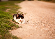 Adorable little cat Stock Images