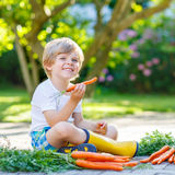 Adorable little child with carrots in domestic garden Stock Photo