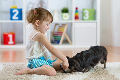Adorable little child girl feeding cute dog stock photo