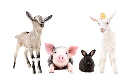 Adorable little farm animals standing together
