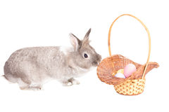 Easter Bunny with basket of Easter Eggs Royalty Free Stock Photos