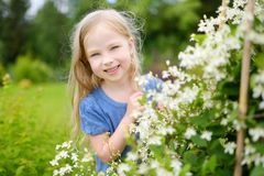 Adorable little girl admiring the abeliophyllum flowers in a garden. royalty free stock image