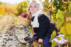 Adorable little girl with apples, autumn time Royalty Free Stock Photos
