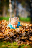 Adorable little girl with autumn leaves Royalty Free Stock Photography