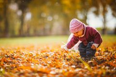 Adorable little girl with autumn leaves in the beauty park Stock Image
