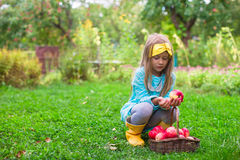 Adorable little girl with basket of red apples Stock Photos