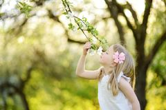 Adorable little girl in blooming apple tree garden on beautiful spring day. Cute child picking fresh apple tree flowers at spring royalty free stock photos