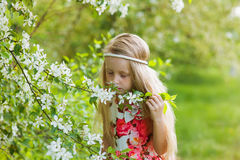 Adorable little girl in blooming apple tree garden on beautiful spring day. Cute child picking fresh apple tree flowers at spring. royalty free stock image