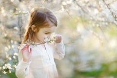 Adorable little girl in blooming cherry garden Royalty Free Stock Photography