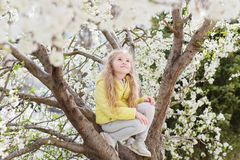 Adorable little girl in blooming cherry tree garden on beautiful spring day. Cute child picking fresh cherry tree flowers at spring royalty free stock photography
