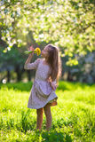 Adorable little girl in blooming spring apple garden outdoors Stock Images