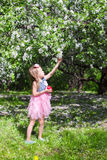 Adorable little girl in blossoming apple orchard. Little adorable girls with butterfly wings under blossoming apple tree Stock Photos