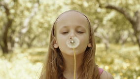 An adorable little girl blow dandelion stock footage