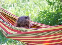 Adorable little girl with curly hair in striped hammock on summer nature background in countryside. stock images