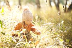 Adorable little girl discovering nature at the autumn forest, sunny day. Stock Photo