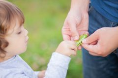 Adorable little girl eating sweet peas from farher`s hands royalty free stock photo