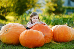 Adorable little girl embracing big pumpkin Royalty Free Stock Image