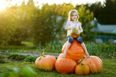 Adorable little girl embracing big pumpkin Stock Photography