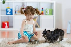 Adorable little girl feeding cute dog. In her room royalty free stock photos