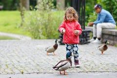 Adorable little girl feeding ducks at summer Stock Photos
