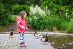 Adorable little girl feeding ducks at summer Royalty Free Stock Image