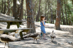 Adorable little girl feeding peacocks Royalty Free Stock Photos