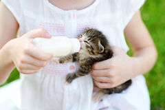 Adorable little girl feeding small kitten with kitten milk from the bottle Royalty Free Stock Photos