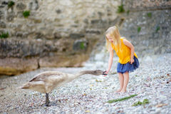 Adorable little girl feeding young swan on a pebble beach Royalty Free Stock Photo