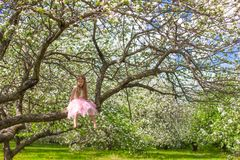 Adorable little girl have fun in blossoming apple Royalty Free Stock Image