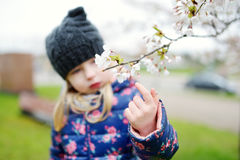 Adorable little girl having fun in blooming cherry garden on beautiful spring day Royalty Free Stock Photo