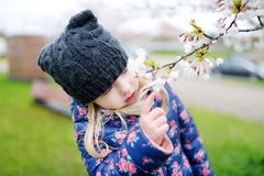 Adorable little girl having fun in blooming cherry garden on beautiful spring day Stock Images