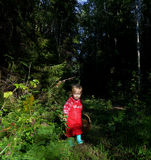 Adorable little girl hiking in the forest on summer day. Royalty Free Stock Image