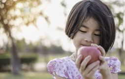 An adorable little girl holding red fresh apple. In her hand. This portrait photo was taken in the park with soft morning light. Nature kid concept stock image