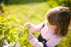 Adorable little girl learning nature in the garden royalty free stock image