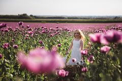 Adorable little girl with long hair in white dress lonely walking in the Lilac Poppy Flowers field royalty free stock image