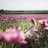 Adorable little girl with long hair in white dress lonely walking in the Lilac Poppy Flowers field royalty free stock photos