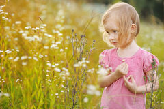 Adorable little girl in a meadow Stock Photography
