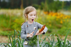 Adorable little girl picking carrots Stock Photography