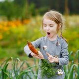 Adorable little girl picking carrots Royalty Free Stock Photography